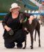 "Tiffany, ""Buddie"", rescue Greyhound"